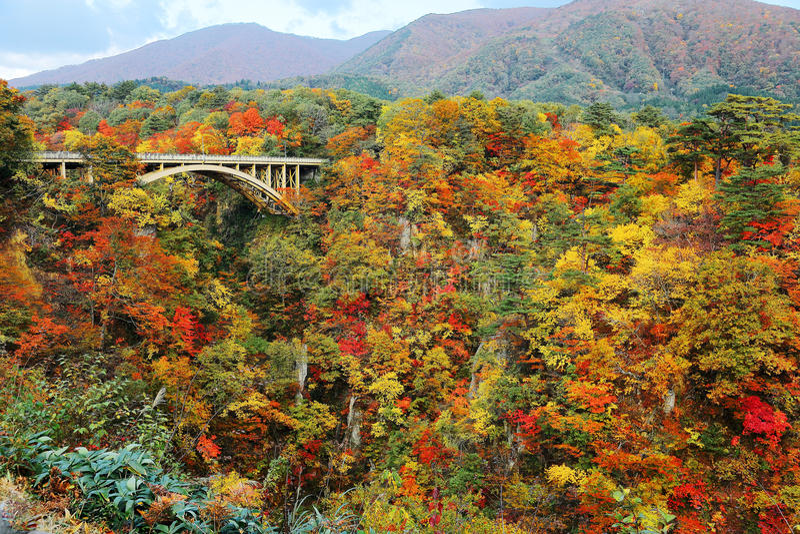 Ausgezeichnete Ansicht einer Straßenbrücke, die über Naruko-Schlucht mit buntem Herbstlaub auf vertikalen felsigen Klippen in Miy stockbilder