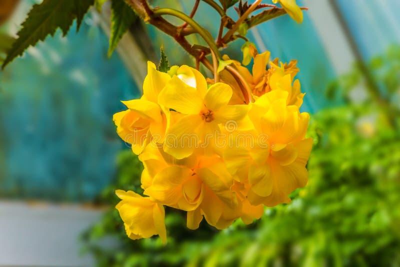 Ausgezeichnete gelb-orangee Blumen stockfotos