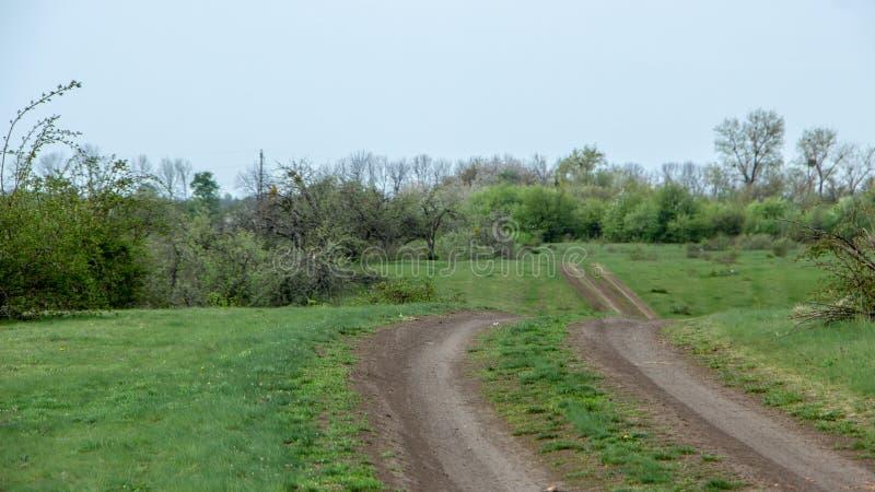 Ausgezeichnete Landschaft der grünen Wiese des Sommers, an der Dämmerung stockfoto