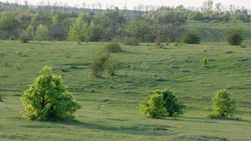 Ausgezeichnete Landschaft der grünen Wiese des Sommers, an der Dämmerung stockbild