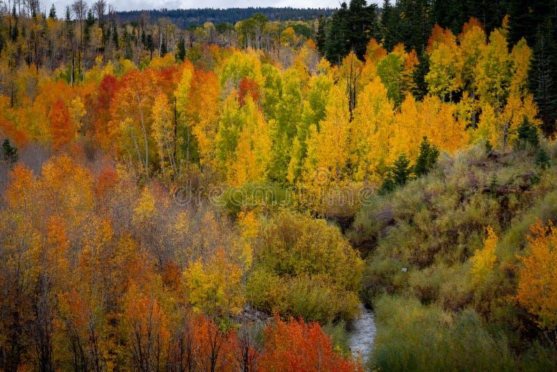 Ausgezeichnete nebelhafte Ansicht der vielen verschiedenen Herbstblattfarben und ein schlängelnder Strom im Kolob-Reservoirbereic lizenzfreies stockfoto