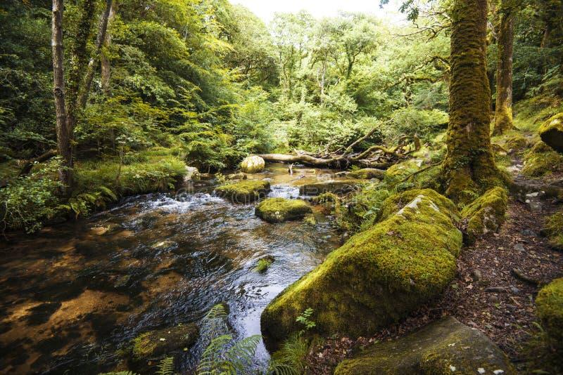 Ausgezeichnete Waldlandschaft in Dewerstone-Holz auf dem Südrand von Dartmoor, Devon, England lizenzfreie stockfotografie