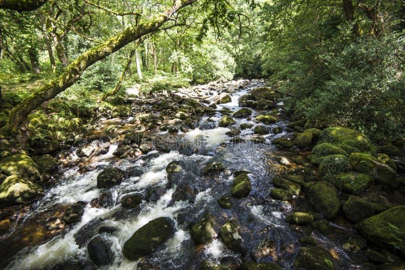 Ausgezeichnete Waldlandschaft in Dewerstone-Holz auf dem Südrand von Dartmoor, Devon, England stockbild
