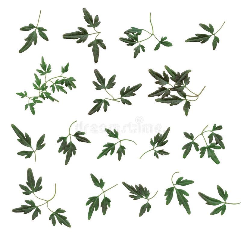 Auslegungelemente - Kleine Blätter Stockfoto