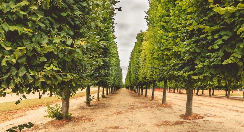 Ausrichtung von Bäumen in einem französischen Garten stockbilder