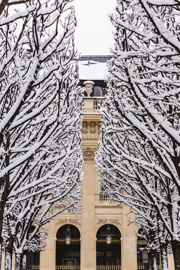 Ausrichtung von Bäumen unter dem Schnee stockbilder