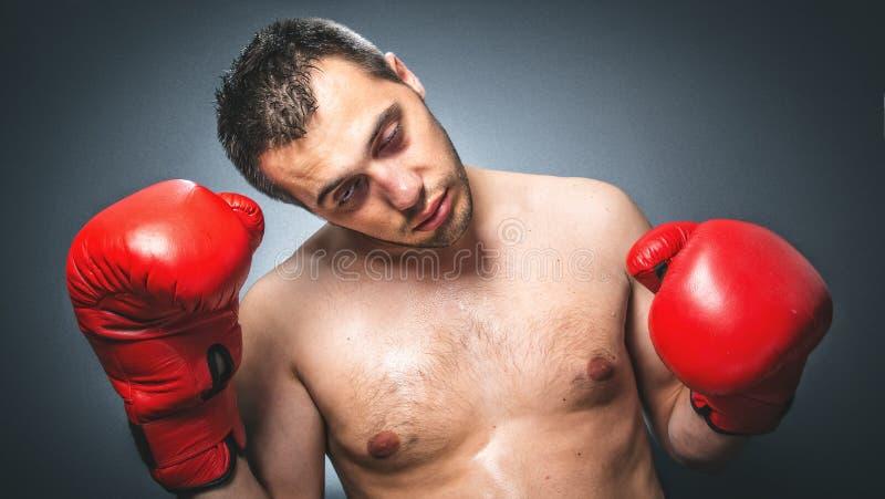 Ausscheidungswettkampf - lustiger Boxer stockbilder