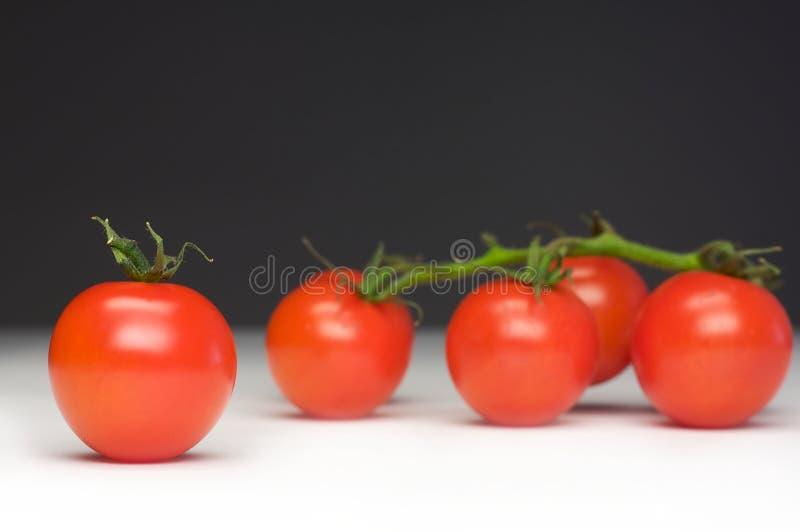 Ausschließliche Tomate stockfoto