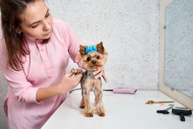 Ausschnitthund-` s Haar stockfoto