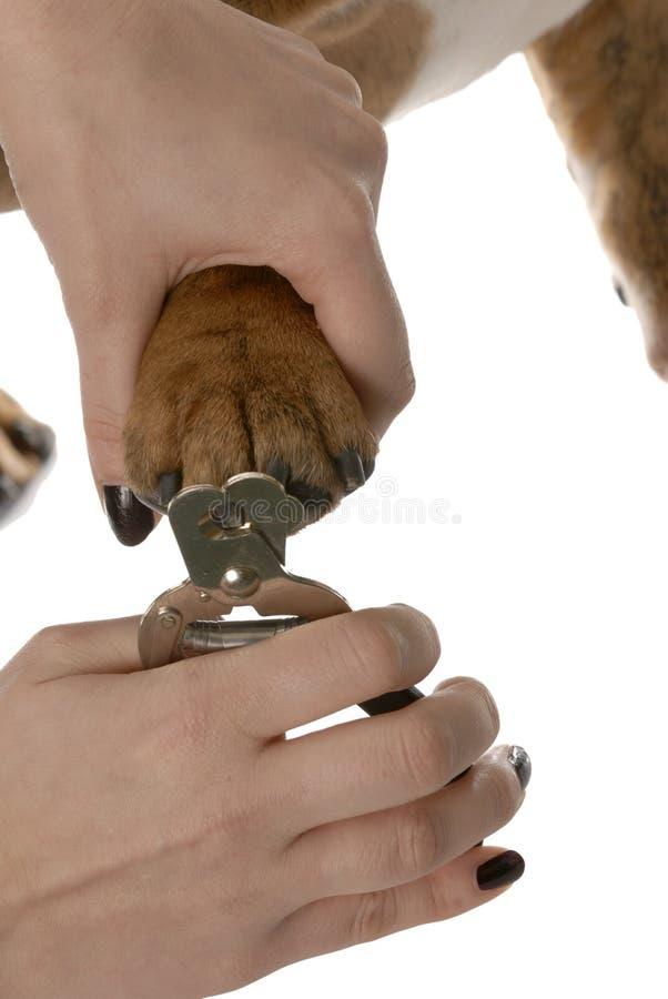 Ausschnitthundezehennägel stockfotografie