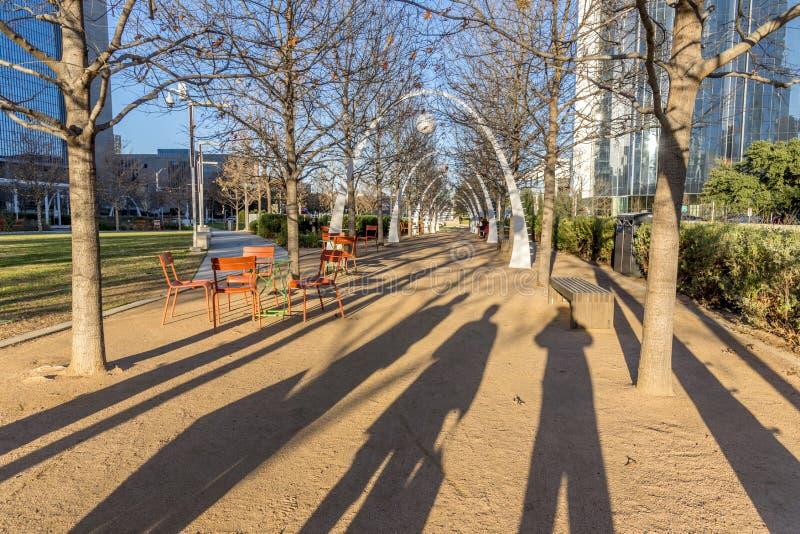 Aussicht auf die getrockneten Bäume in einem Park in Dallas, Texas, Vereinigte Staaten lizenzfreies stockbild