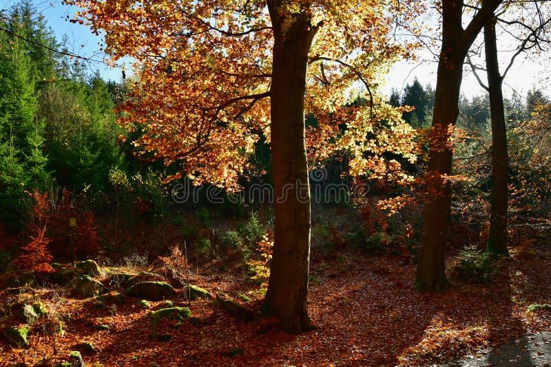 Aussicht auf die herbstliche Natur , Südböhmen lizenzfreie stockfotos