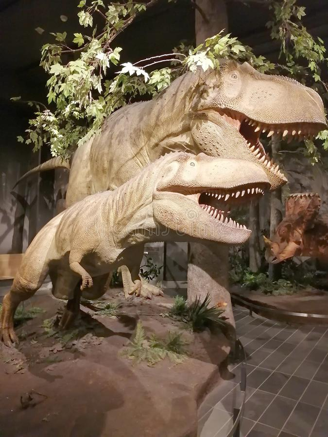 Ausstellung Dinosaur im kanadischen Naturmuseum lizenzfreies stockbild
