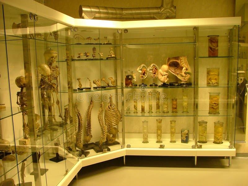 Ausstellung im Autopsieraum lizenzfreie stockbilder