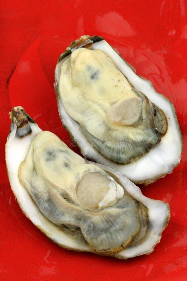 Auster im Shell stockbilder