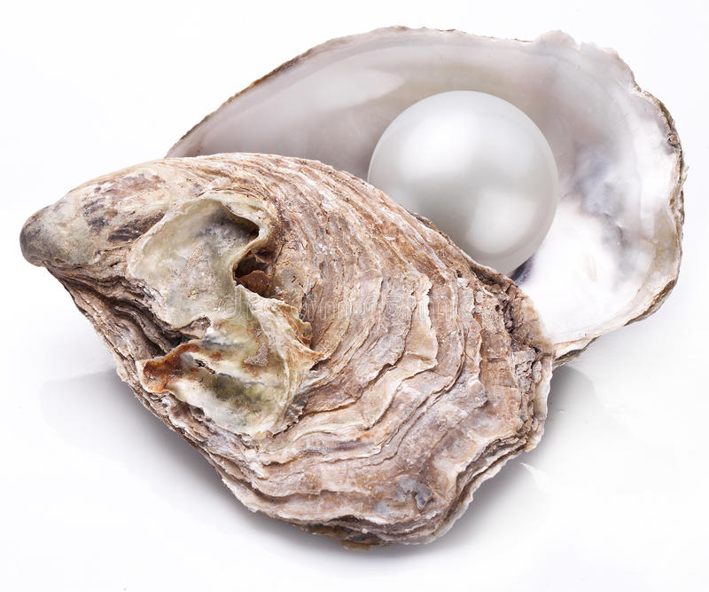 Auster mit der Perle lokalisiert stockbilder