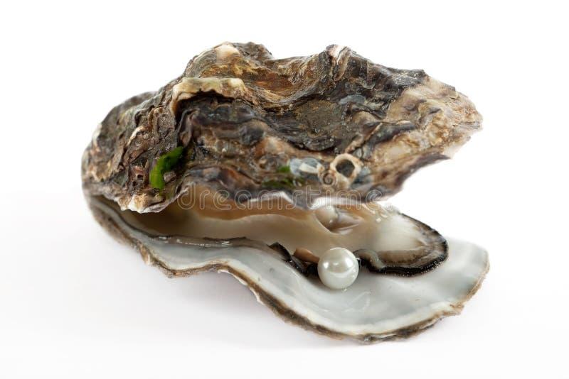 Auster mit Perle lizenzfreie stockfotografie