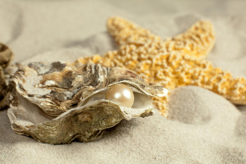 Auster mit Perle stockfoto
