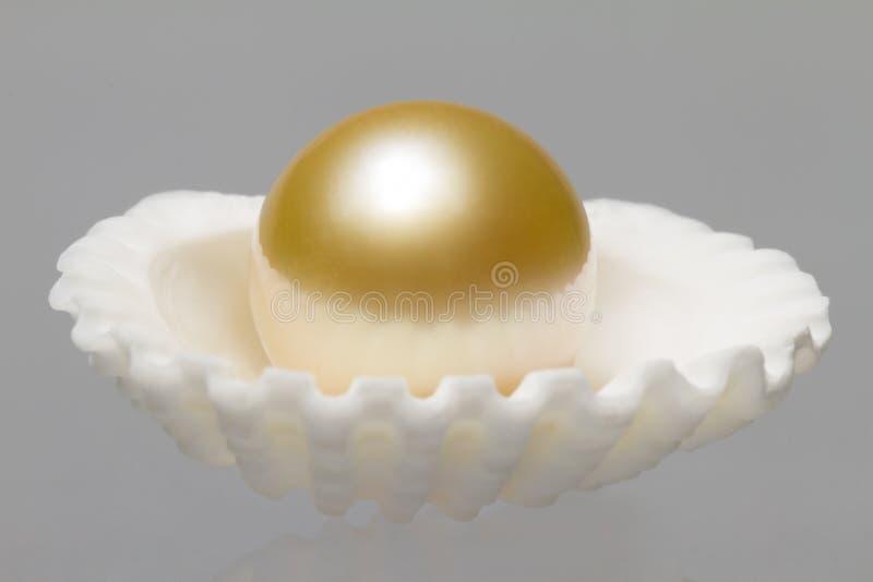 Austeren-Shell und Perle stockfoto