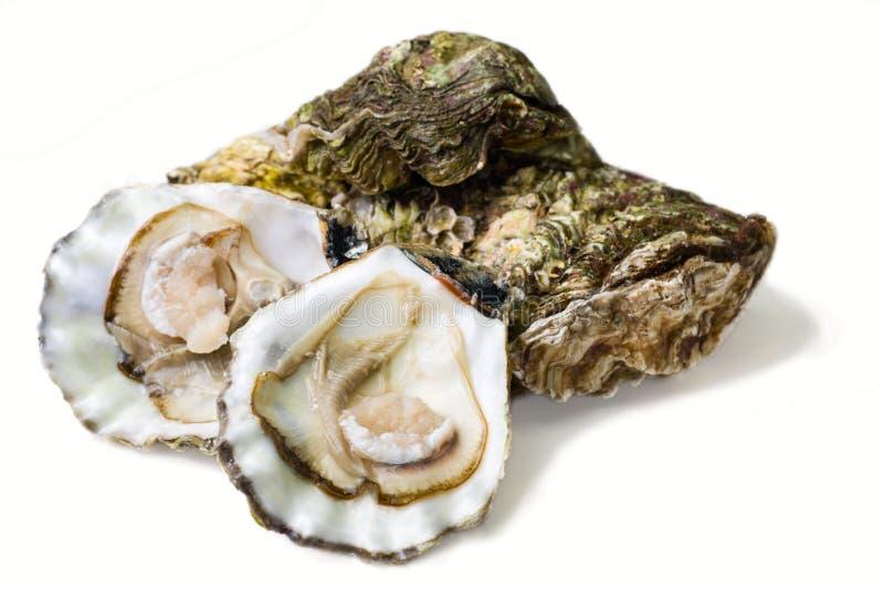 Austern stockfotografie