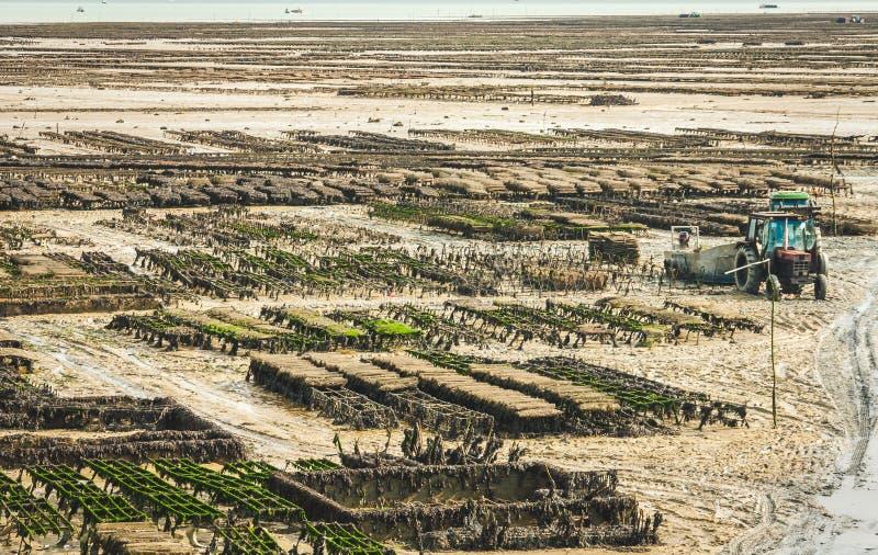 Austernbanken auf Bauernhof in Cancale stockbilder