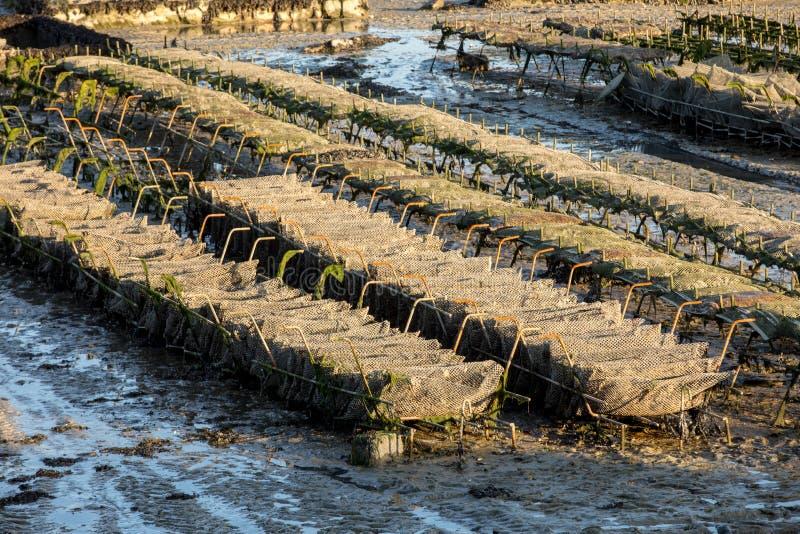 Austernbanken bei Ebbe im Austernbauernhof, Cancale, Bretagne, stockfoto