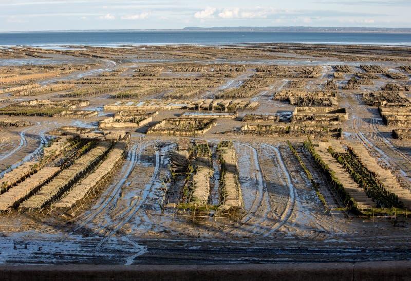 Austernbanken bei Ebbe im Austernbauernhof, Cancale, Bretagne, stockfotos