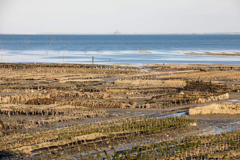 Austernbanken bei Ebbe im Austernbauernhof, Cancale, Bretagne, stockbilder