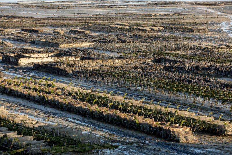 Austernbanken bei Ebbe im Austernbauernhof, Cancale, Bretagne, Frankreich stockfoto