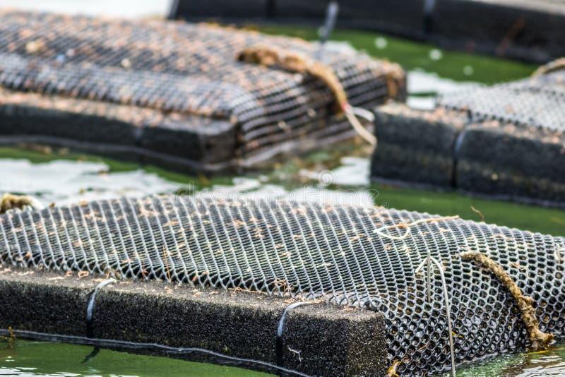 Austernbauernhoffallen und -netze im Damariscotta-Fluss, Maine stockfoto
