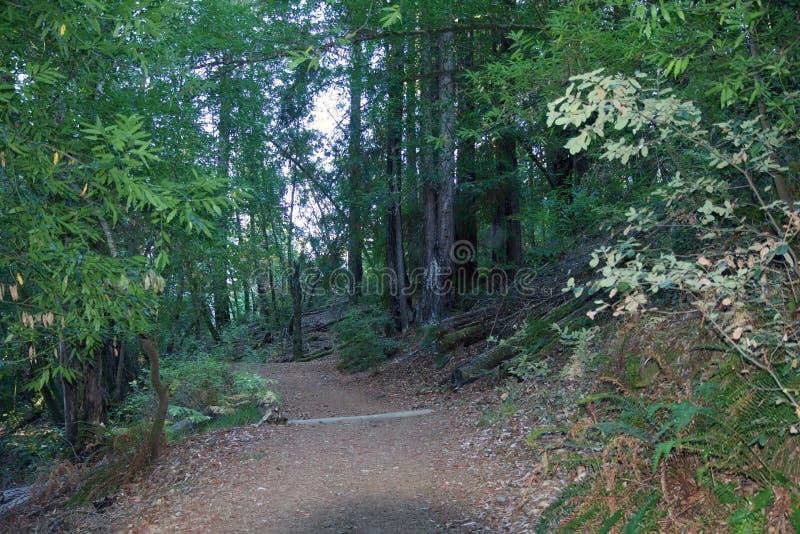 Austin Creek State Recreation Area - parque que abarca una área silvestre Su incluye los barrancos, laderas herbosas, roble-CA fotografía de archivo libre de regalías