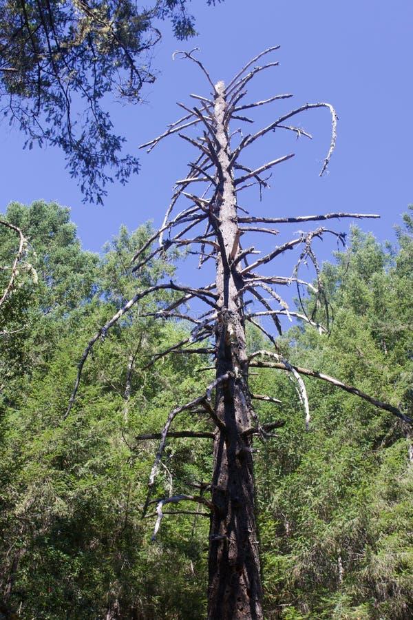 Austin, Nebenfluss, Zustand, Erholung, Bereich, - parken Sie die Umfassung eines Wildnisgebiets Es ist in Sonoma County stockfoto