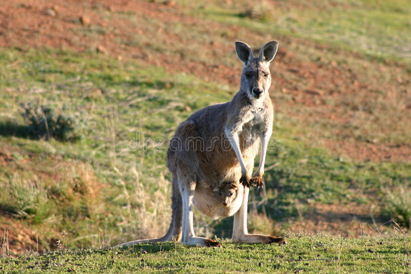 Australië stock foto's