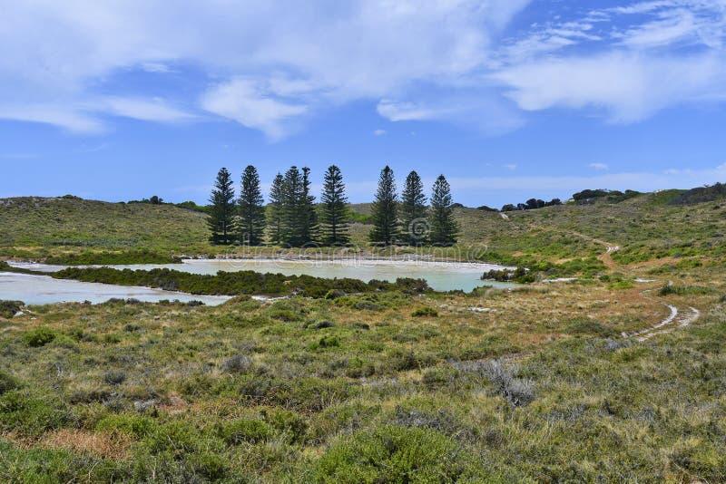 Australië, Rottnest-Eiland royalty-vrije stock fotografie