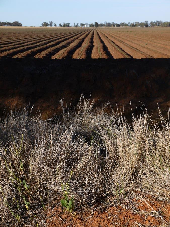 Australia: bawełna przykopy śródpolni irygacyjni zdjęcia royalty free