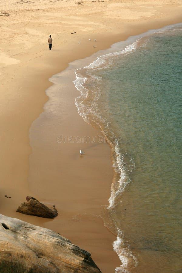 australia bay beach botanika sandy Sydney fotografia stock