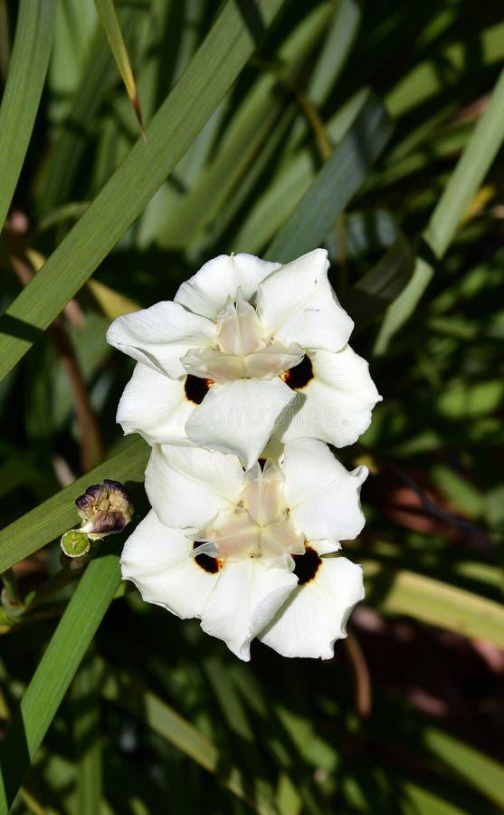 Australia, Botany, wildflower stock photo
