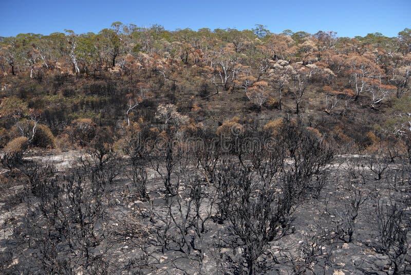Australia bush fire: burnt hillside h stock images