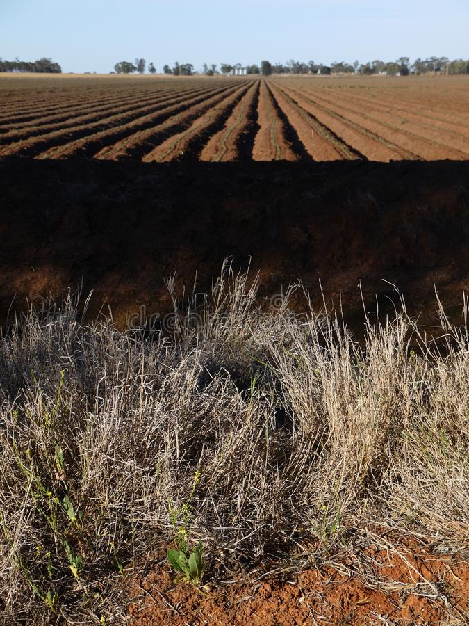 Download Australia: Cotton Field Irrigation Ditches Stock Photo - Image: 27327718