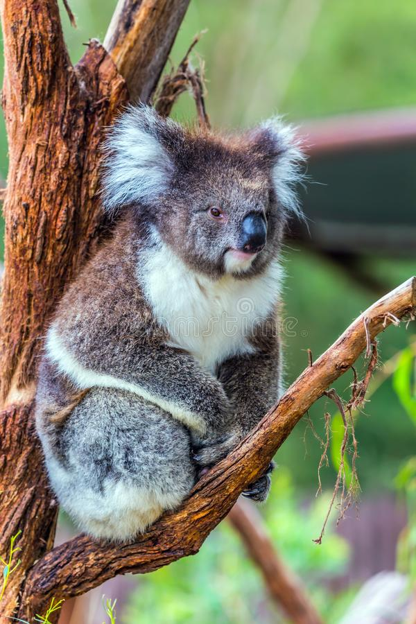 Australia endemic stock photo