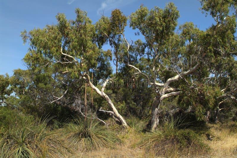 Australia, SA, Botany, royalty free stock photos