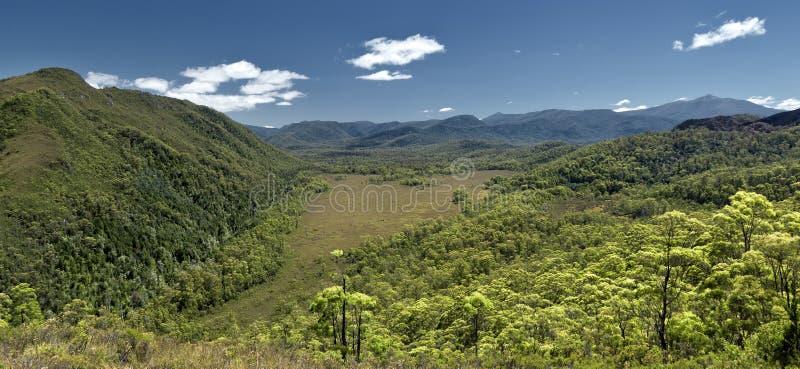 australia lasu deszcz obraz royalty free
