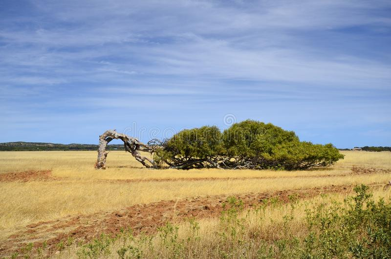 Australia, Western Australia, nature royalty free stock photo