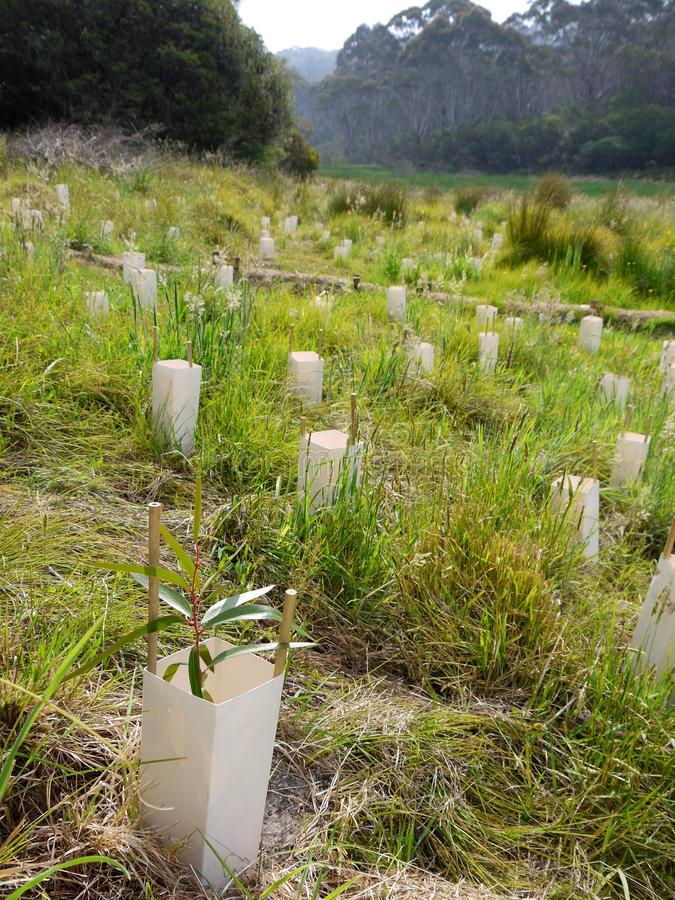 Download Australia: Native Bush Regeneration Tree Planting Stock Photo - Image of care, planting: 28041720