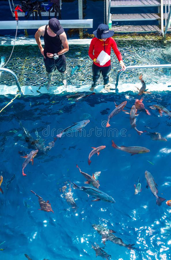 Australia, natural and urban landscapes. Port Douglas, Australia - October 19, 2014: Queensland region, lifegards feeding the fish in the great barrier marine stock images