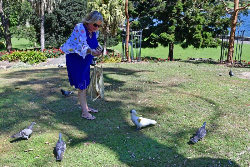 Australia, NSW, Sydney, kobieta z ptakami obraz royalty free