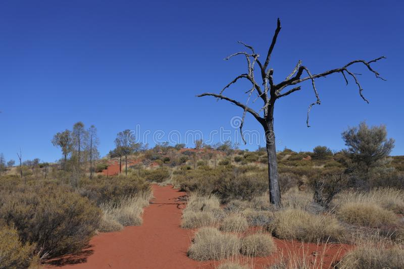 Australia outback wild landscape view royalty free stock image