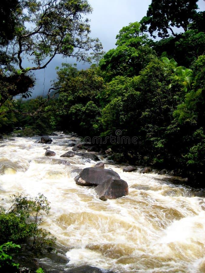 Australia, Queensland. Daintree park narodowy. Halna rzeka i tropikalny las deszczowy fotografia stock