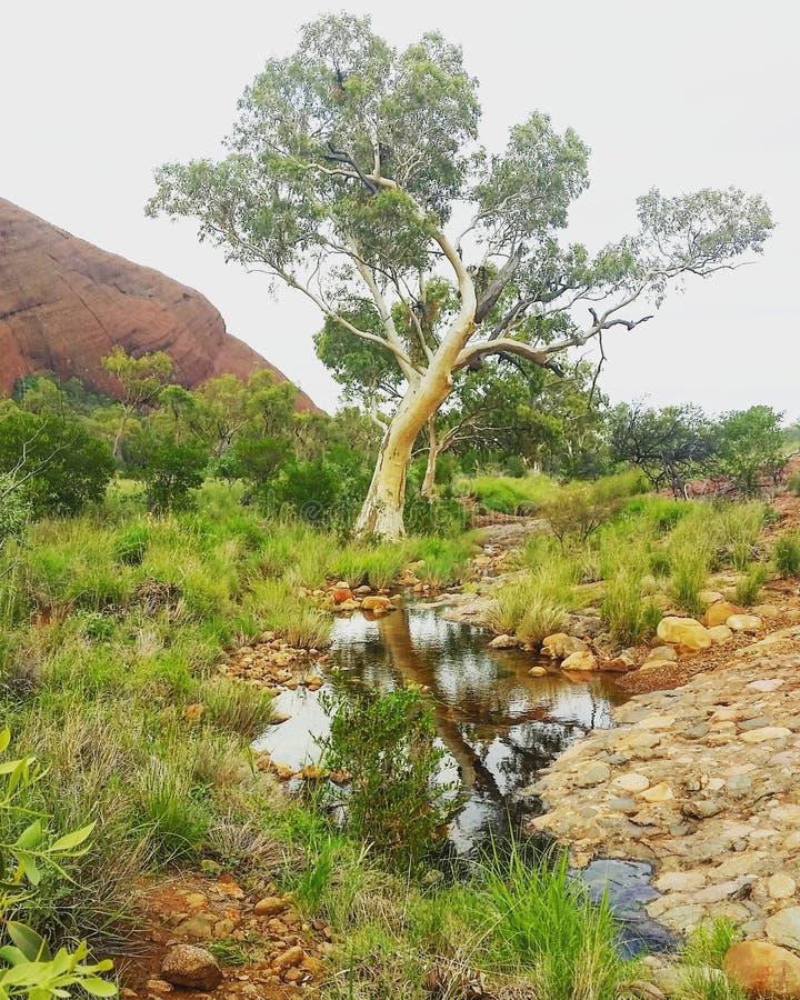 Australia& x27; s binnenland stock foto