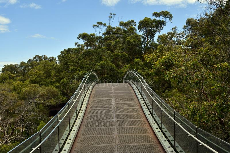 Australia, WA, Perth, Kings Park. Australia, Perth, tree top walk with bridge in public Kings Park, a preferred tourist attraction in the capital of Western stock image